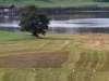 IMG_3253_crop